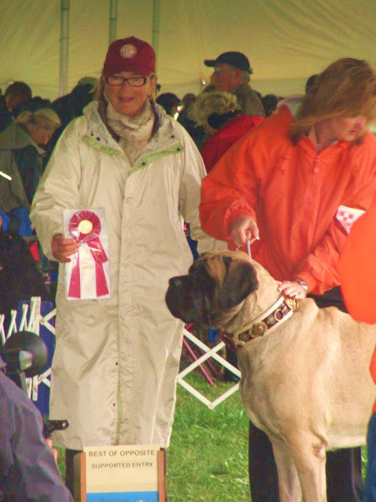 Mastiff Club of America female Specialty winner