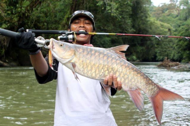 Cara Memancing Ikan Mahseer