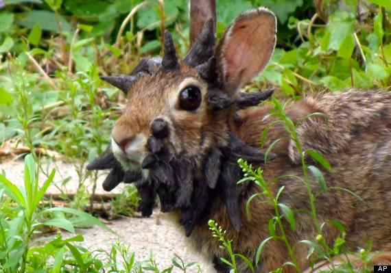 Kelinci dengan Wajah Paling Menakutkan