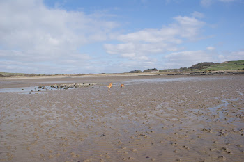 Plus 2 Dogs explore Brighouse Bay