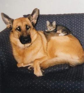 Perros Vs. Gatos Dog-kitty