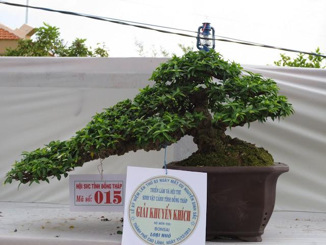 Hình ảnh Triễn Lãm Bonsai Tại Cao Lãnh 2012