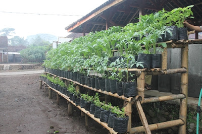 Menanam Bunga / Sayuran Di Pot & Polybag