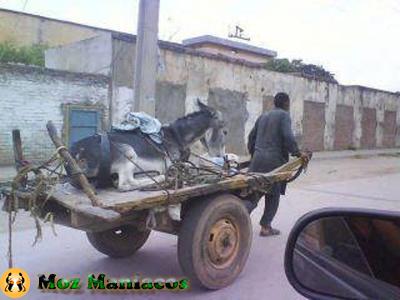 Besteiras de Moçambique