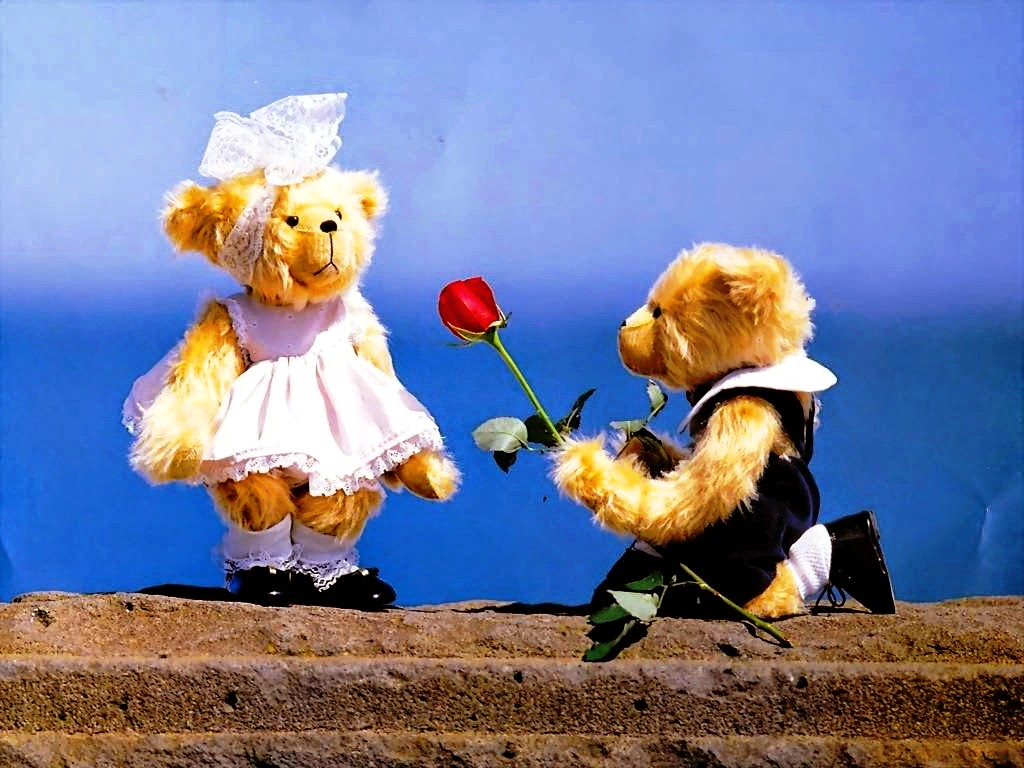 Teddy Proposing Cute Teddy Day Hd Wallpaper Images