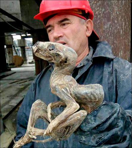 Criatura mumificada desconhecida é encontrada em mina de diamantes