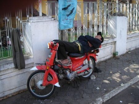 funny man sleeping on bike