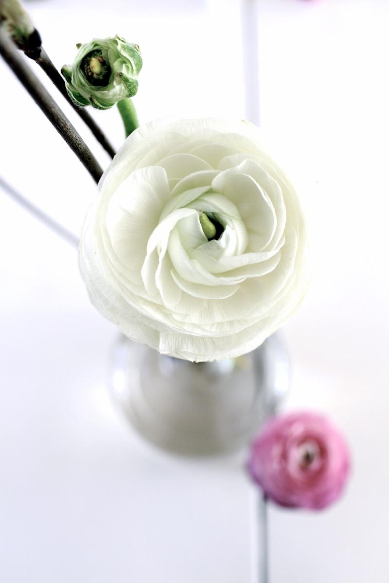 Valkoinen leinikki
