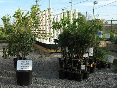 vertical aeroponic farm:  Hollygrove Market & Farm, NOLA
