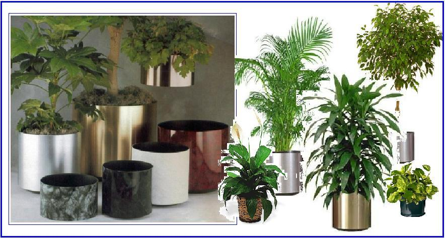 Agrihunt indoor plants for Indoor flowers and plants
