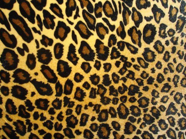 Dedos con Estilo: Estampado de leopardo (Nivel medio) / Leopard print ...