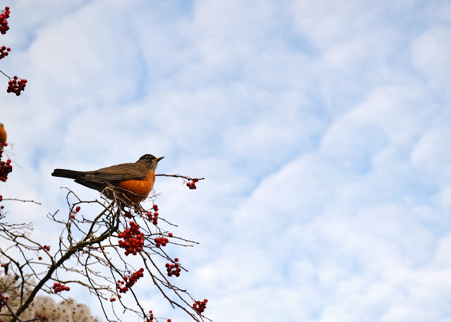 winter, nature, photography, seattle, hawthorne, robin, fleur d'elise