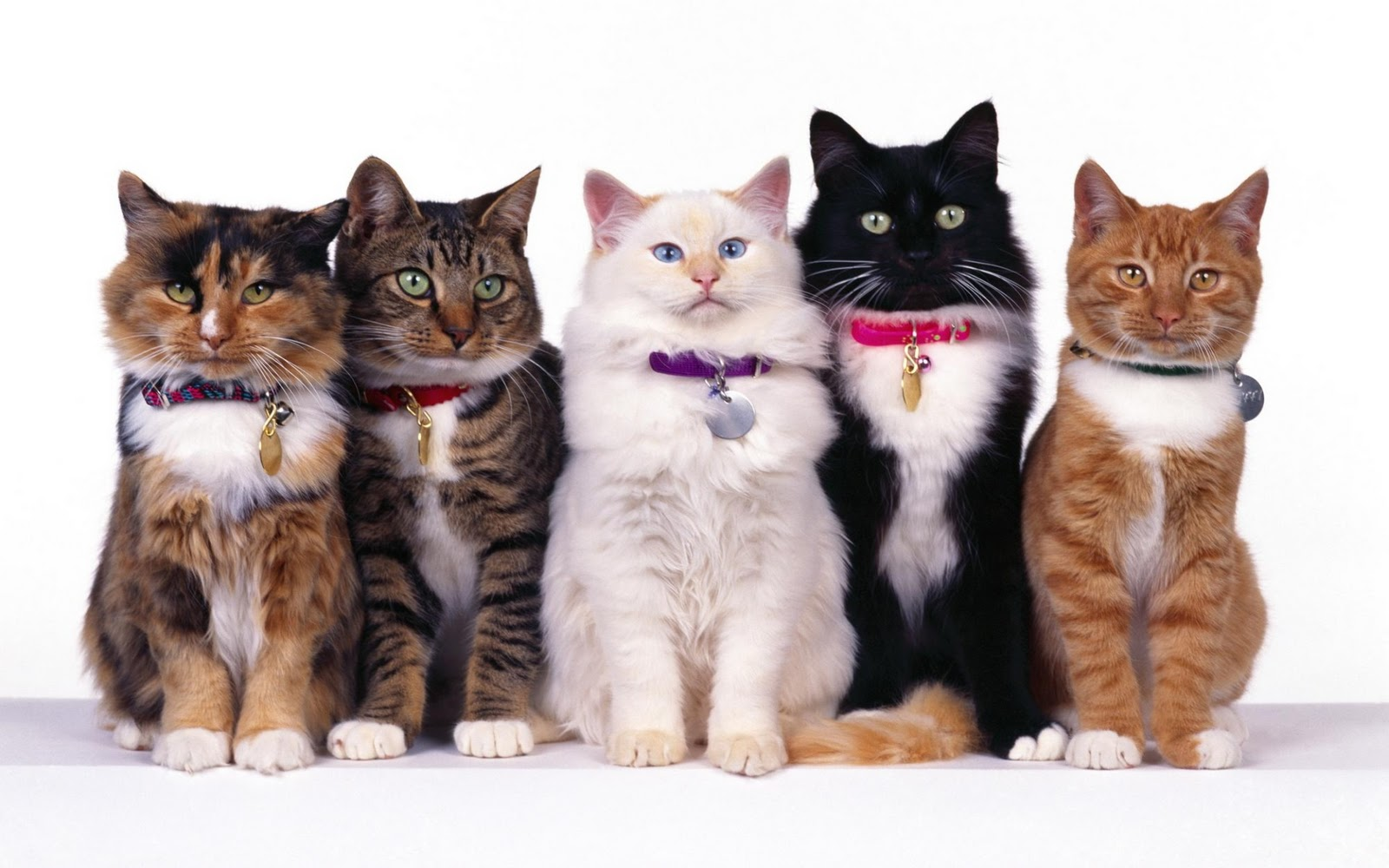 http://1.bp.blogspot.com/-l8brhKZ_xas/TopamF6ffGI/AAAAAAAABb0/3LBxdA05oNQ/s1600/group_of_cats_widescreen_wallpaper_91080.jpg