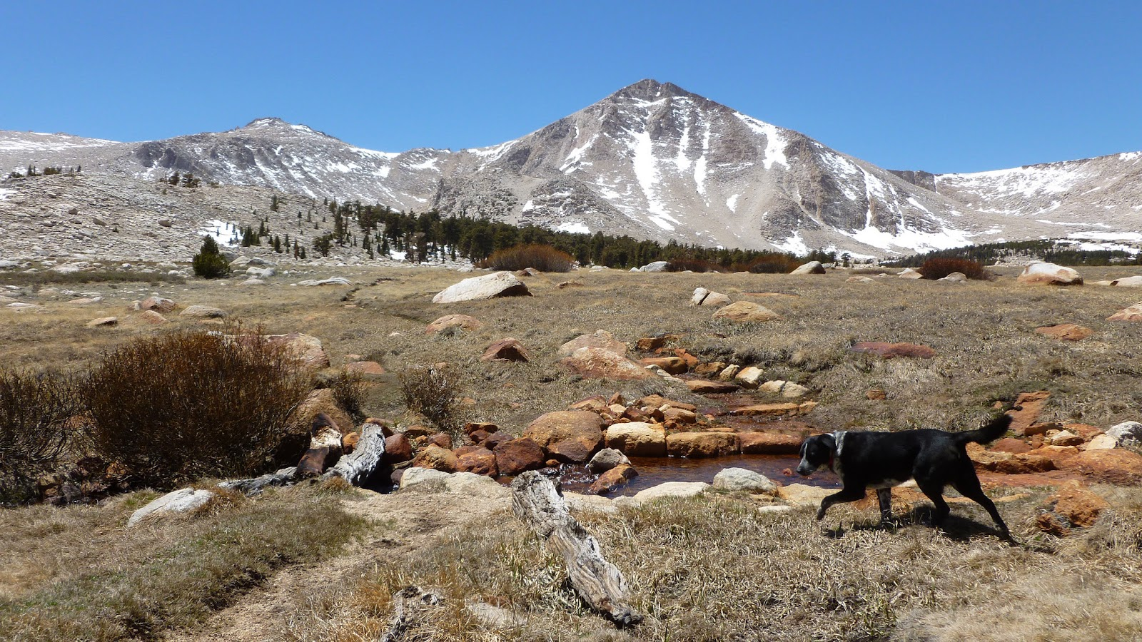 Best Places To Camp With Dogs In Northern California
