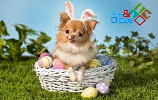 Ovos de chocolate para cães