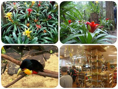 Bromélias do Parque das Aves, em Foz do Iguaçu.