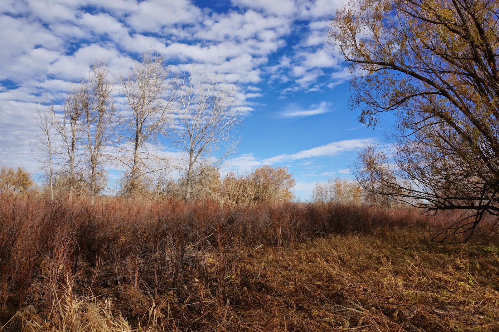 Go hike colorado wetlands preserve cherry creek state park for Cherrycreek