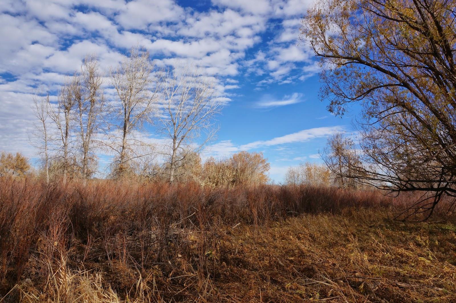 Go hike colorado wetlands preserve cherry creek state park for Cherry creek