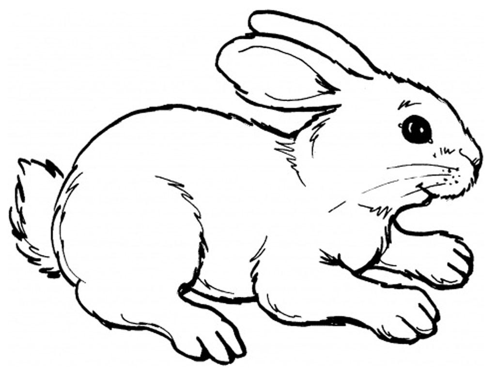 realistic baby bunny coloring pages - photo#5