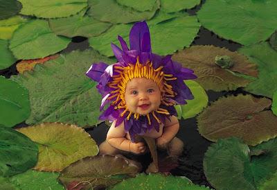 Bella flor de loto sobre el agua