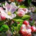 Beautiful Flowers images wallpapers gallery