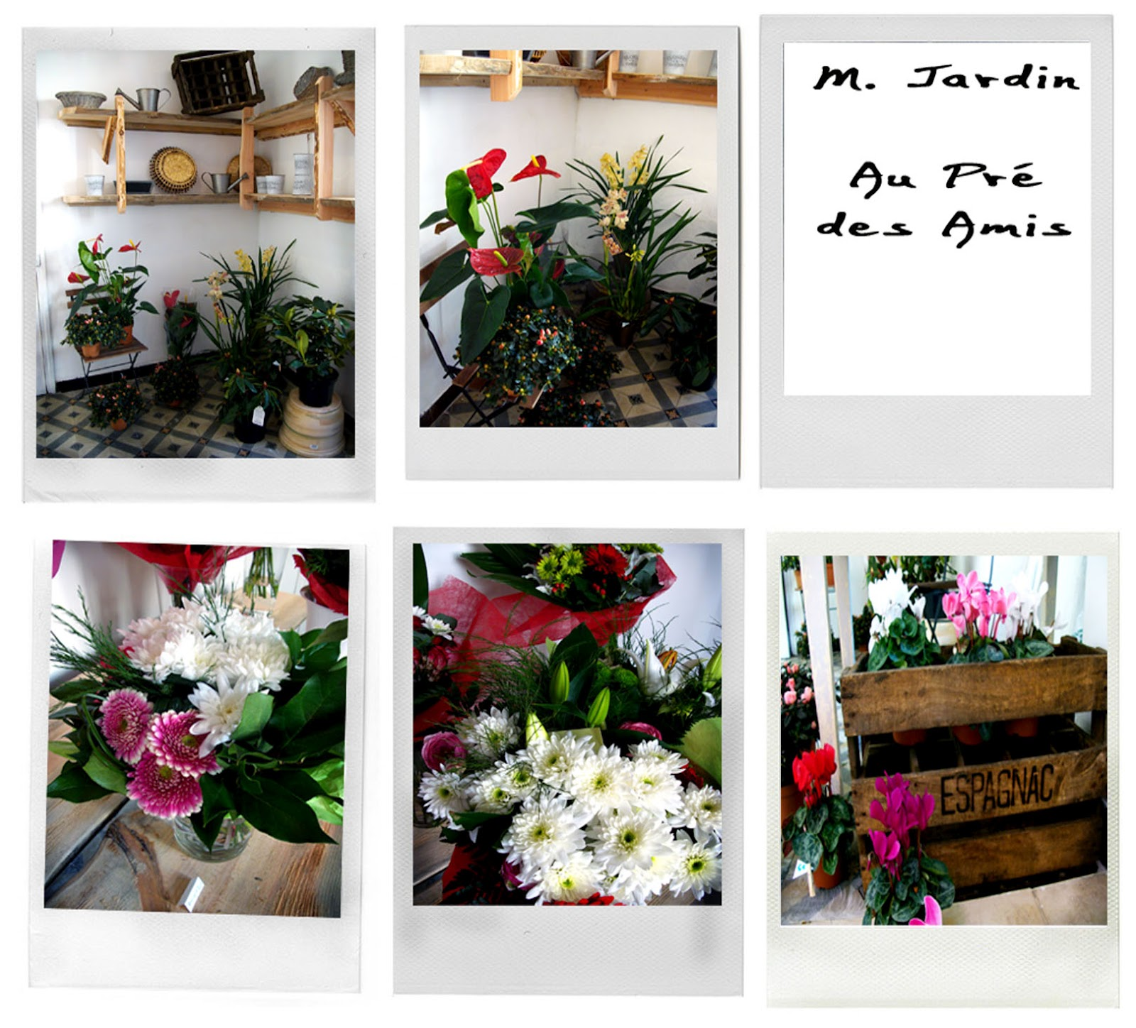 Fleurs plantes etc au pr des amis la boutique for Au jardin des amis