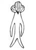 Caput anguli