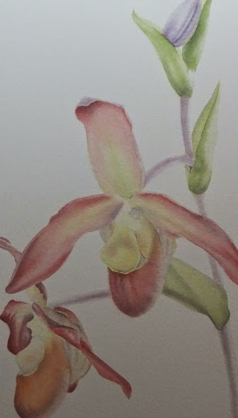 Phragmipedium Bel royal - strengthening the shadows by  Polly o'Leary©2014 All rights Reserved