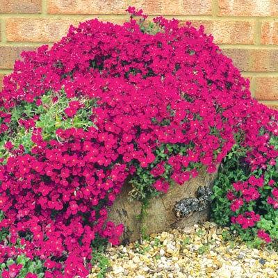 Arte y jardiner a plantas perennes con flores para maceteros - Bauhaus macetas ...