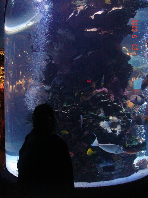 Aquarium at Rain Forest Cafe,San Francisco