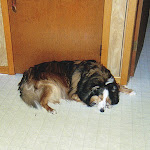 Hickory Dickory Dog