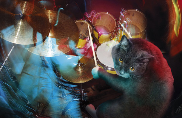 Kucing main drum