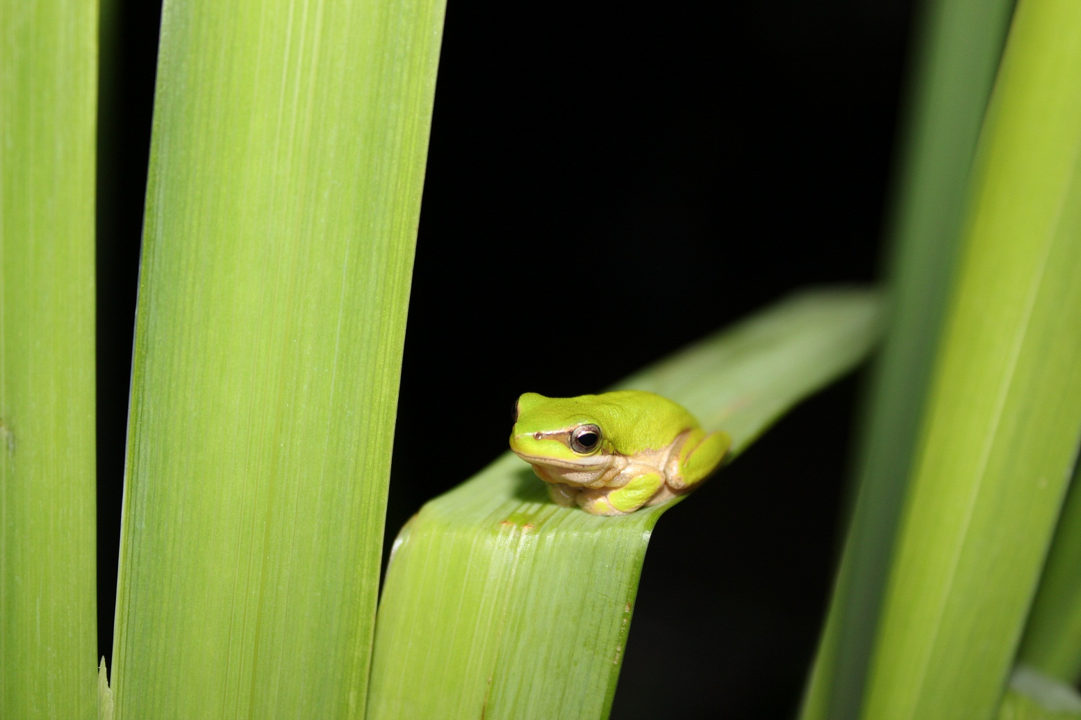 brisbane backyard naturalist we found our mystery frog