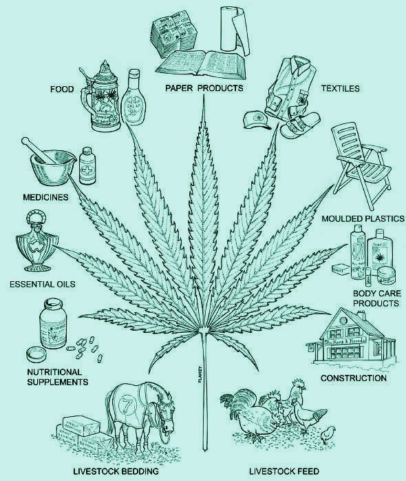 Gods And Cannabis