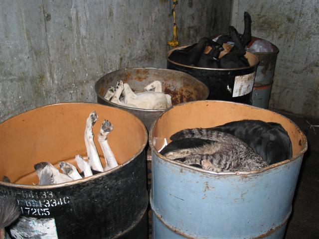 shelter euthanasia