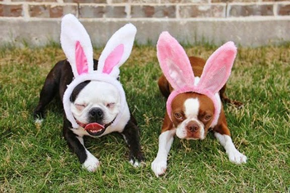 Easter Funny Images  2015