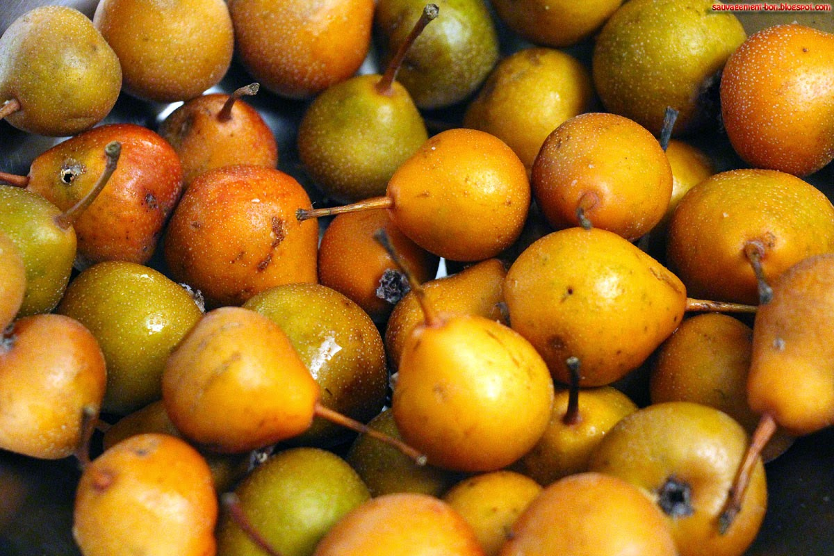 Sauvagement bon p 39 tites poires - Peut on congeler des poires ...