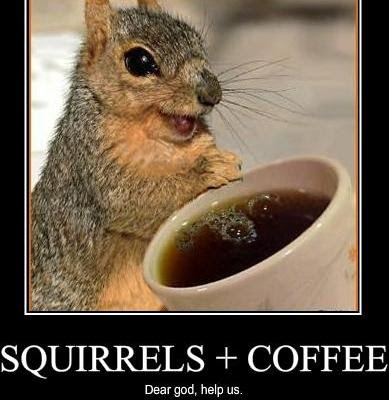 Funny Squirrel Memes - Squirrels plus coffee dear god help us!  Reminds me of Hammy from Over the Hedge! via Devastate Boredom