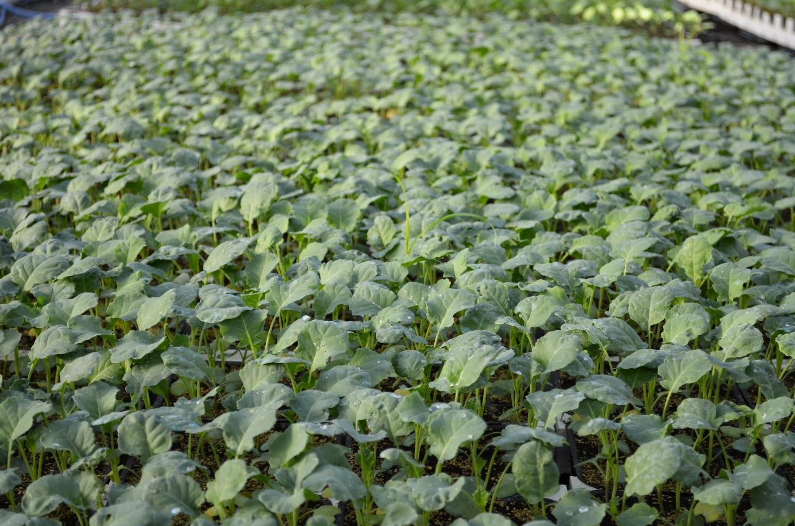 piante fiori sementi sardegna vendita ingrosso e