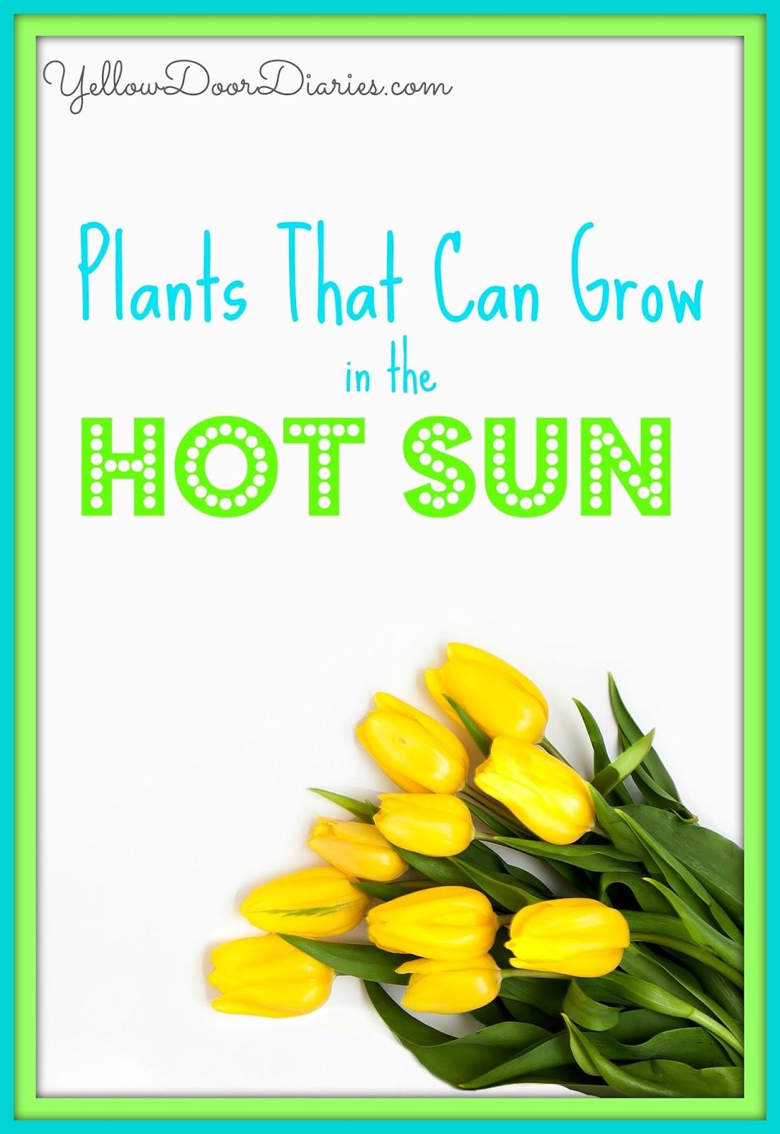 Yellow Door Diaries Plants That Can Grow In Hot Sun