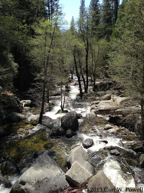 Chilnualna Creek, Wawona, Redwoods In Yosemite