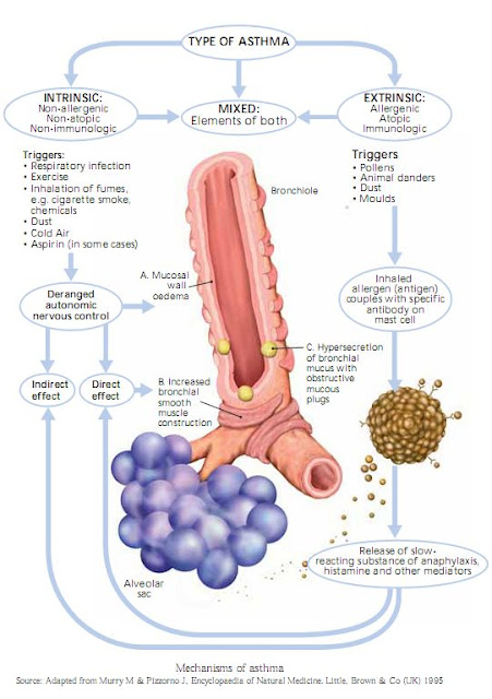 asthma_infections