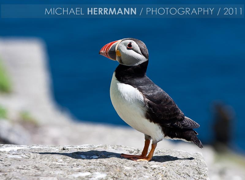 Landscape Photography In Kerry Ireland Skellig Birds