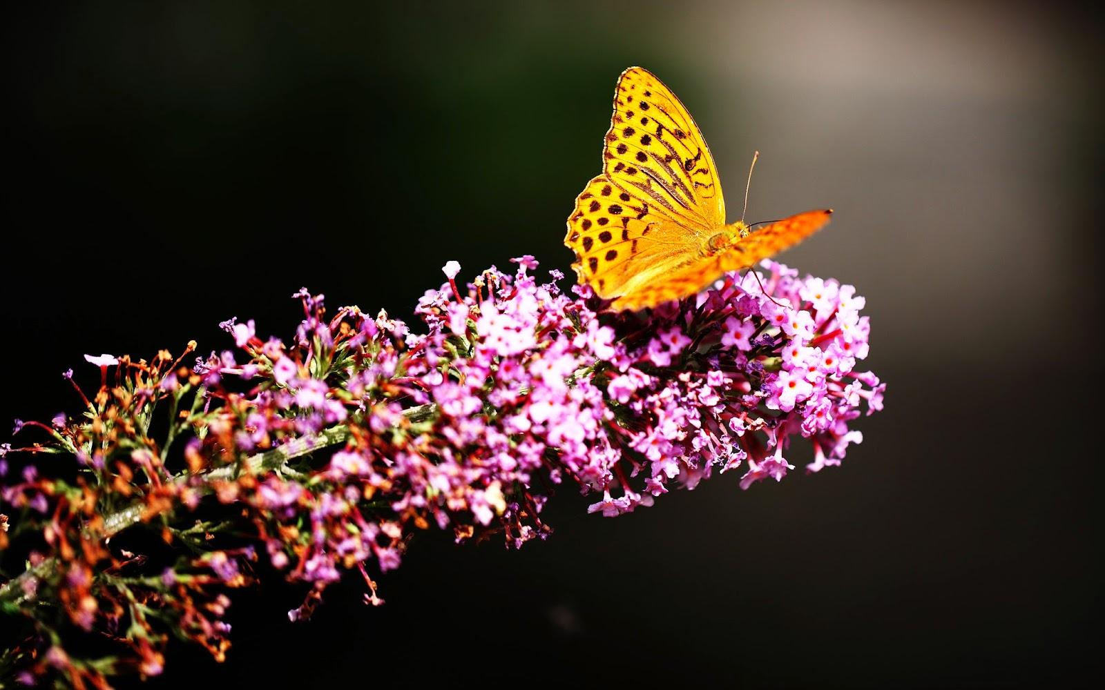 Butterfly in Botanic Garden