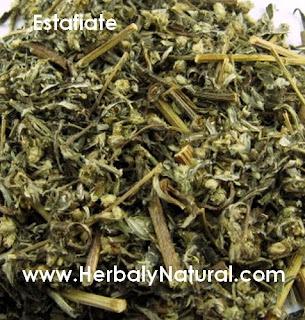 Plantas Medicinales en Merida, Herbal y Natural: Estafiate