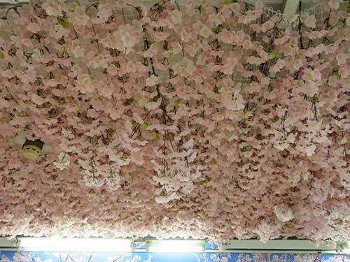 東京メトロ銀座線の上野駅に桜が彩った004