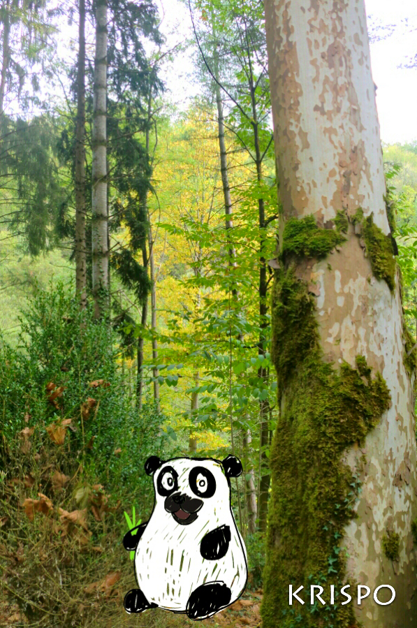 dibujo de oso panda en fotografia de bosque