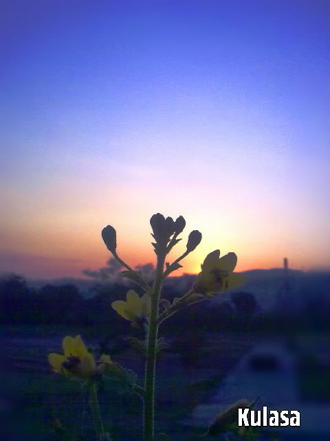 dawn shot with yellow flowers