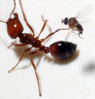 MOTIVASI  (Kisah Semut & Lalat)