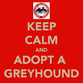Greyhounds make fab pets!